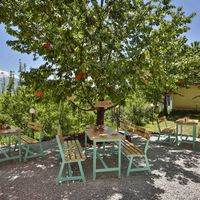 The cafe with apple orchards.