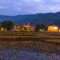 The paddy fields right outsid the hostel.